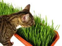 Pet Sprouts Cat